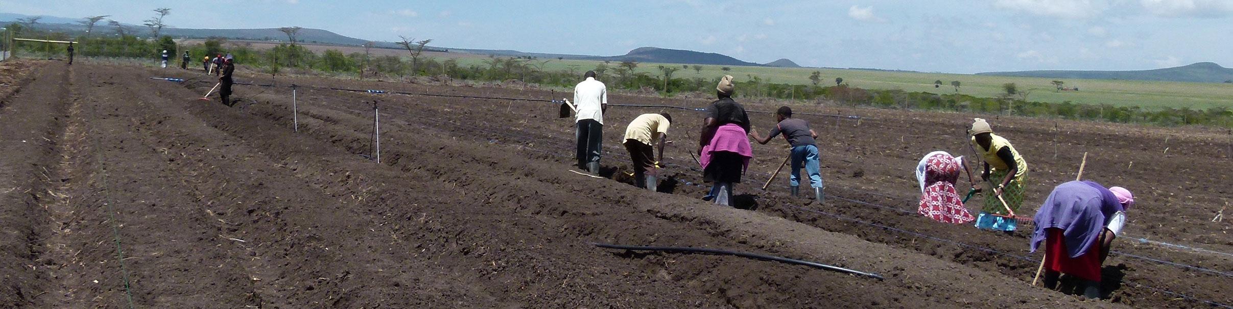 women working field banner image